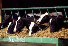 HOW TO RAISE LIVESTOCK (FARM ANIMALS)